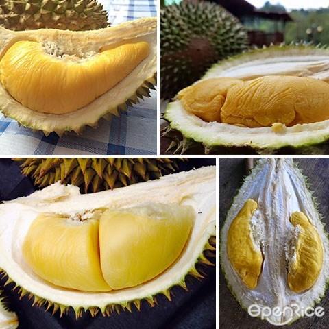 榴莲季节, Durian,榴莲,榴莲园, durian farm, raub, karak, penang, melaka, malacca, bentong